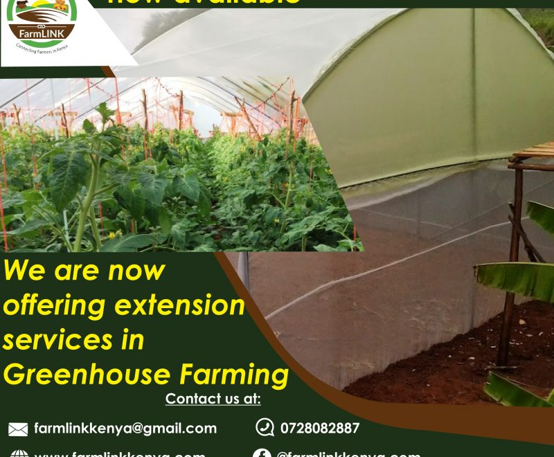 greenhousefarmingextension