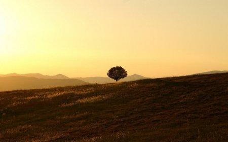 Tree Umbria Italy farmhouse