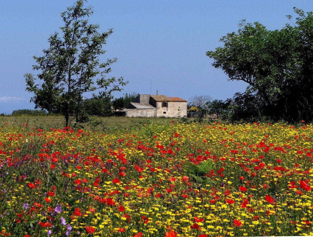 Farmhouse in countryside, Calabria, Italy.