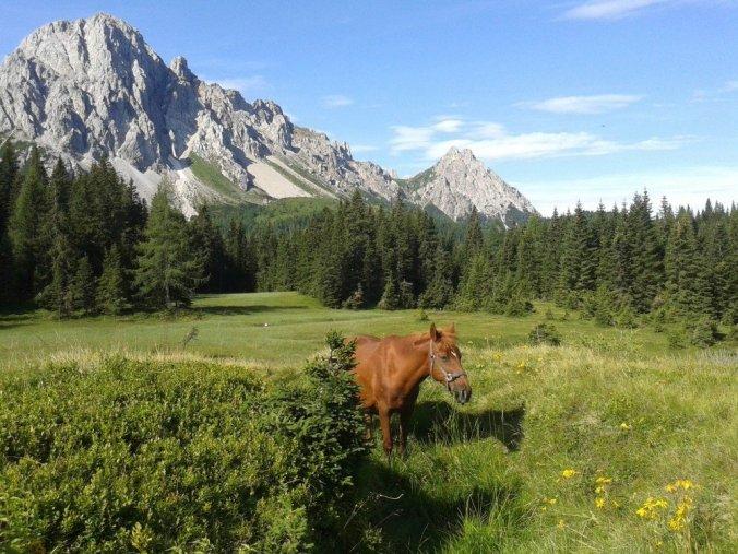 Horse on a farm in Friuli-Venezia-Giulia, Italy.