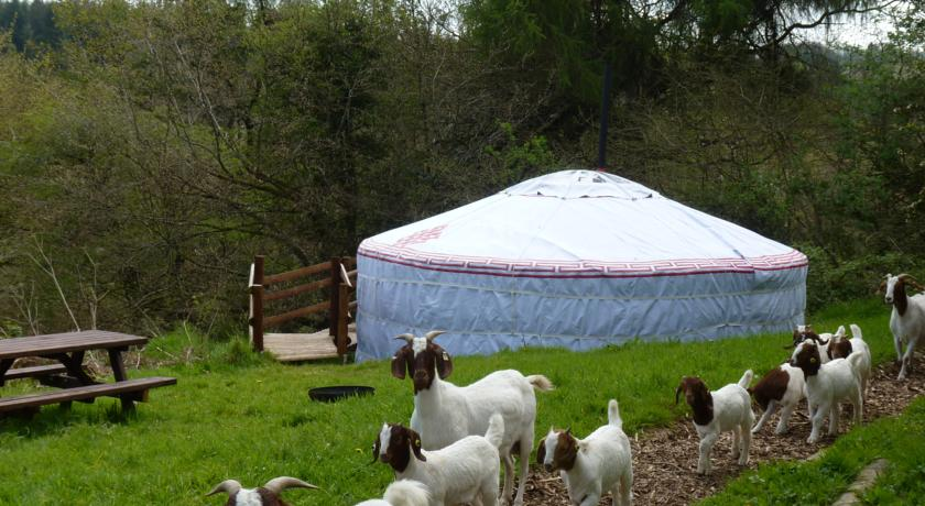 farm stay and glamping in devon uk
