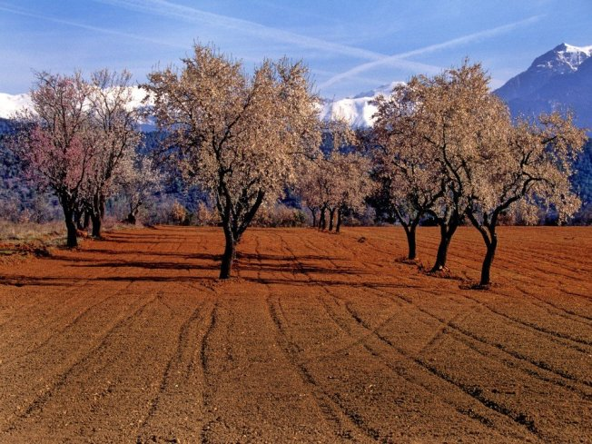 almond-tree-farmstay catalunya