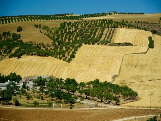 farmstay andalusia-south of spain