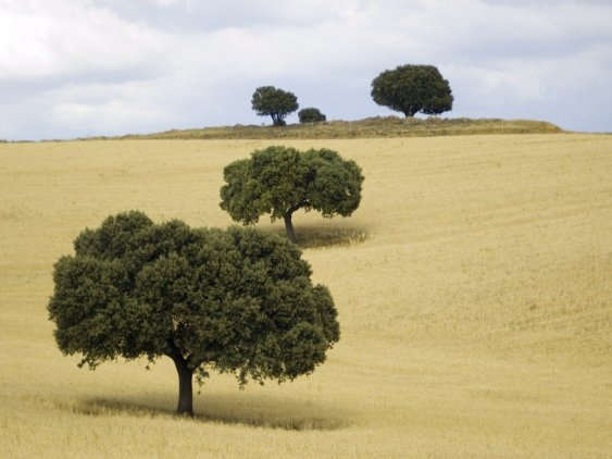 Trees on hillside in castilla, agritourism in spain