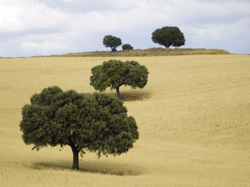Trees on a hillside agriturismo farm stay near Madrid, Castilla, Central Spain.