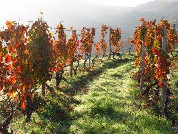 DOURO VALLEY VINEYARD STAY FARMSTAY PORTUGAL