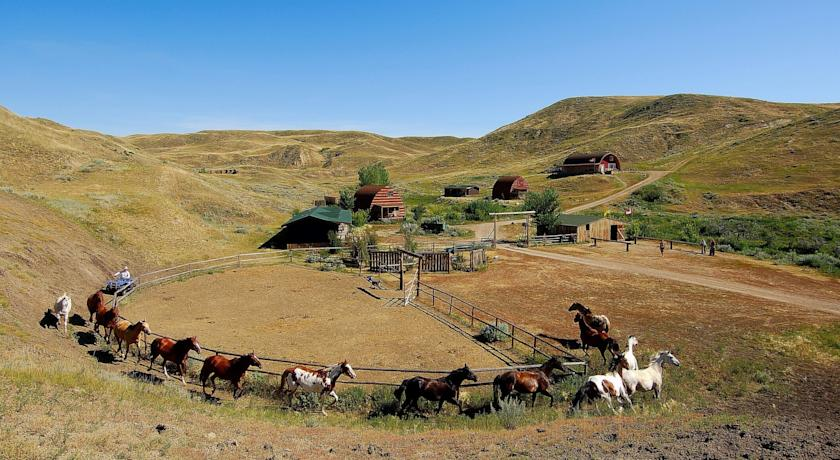 Horses at La Reata Guest Ranch, a dude ranch in Saskatchewan, Canada.