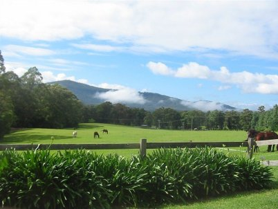 Horses at Rocky Mountain Lodge Farmstay, Kangaroo Valley, NSW.