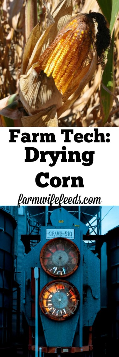 Farm Technology involves drying field corn for proper storage and use of the corn.