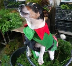Boris the mischievious elf