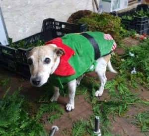 Peggy 'not so happy'elf