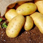 Homegrown white potatoes