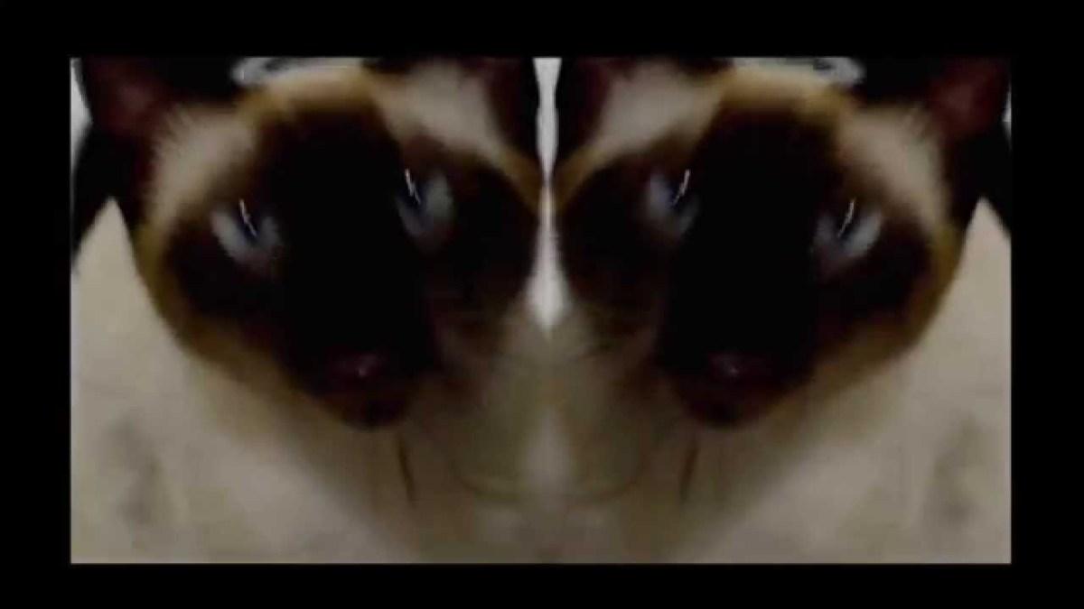 Abertura de Game of Thrones cantada por um gato