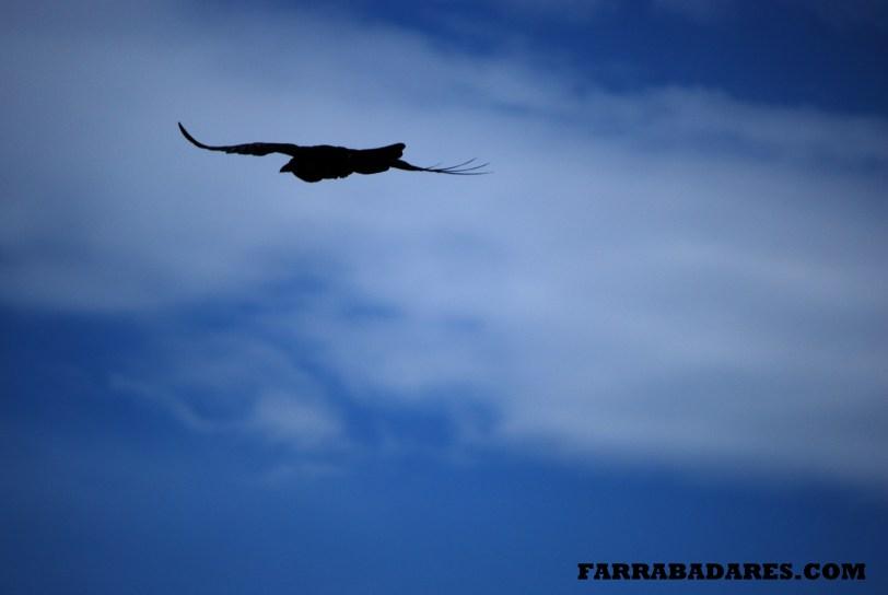 Pássaro em Yellowstone Lake