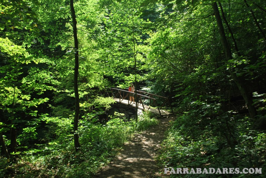 Shenandoah National Park - Rose River Loop trilha