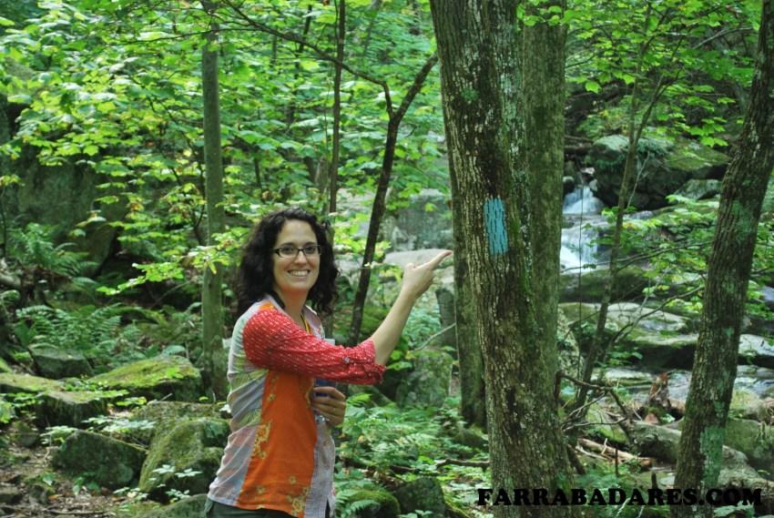Shenandoah National Park - a tinta azul é a marcação da trilha