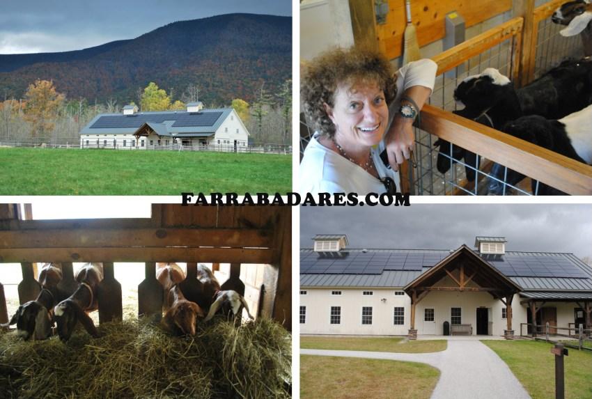 fazenda de queijo de cabra em Hildene