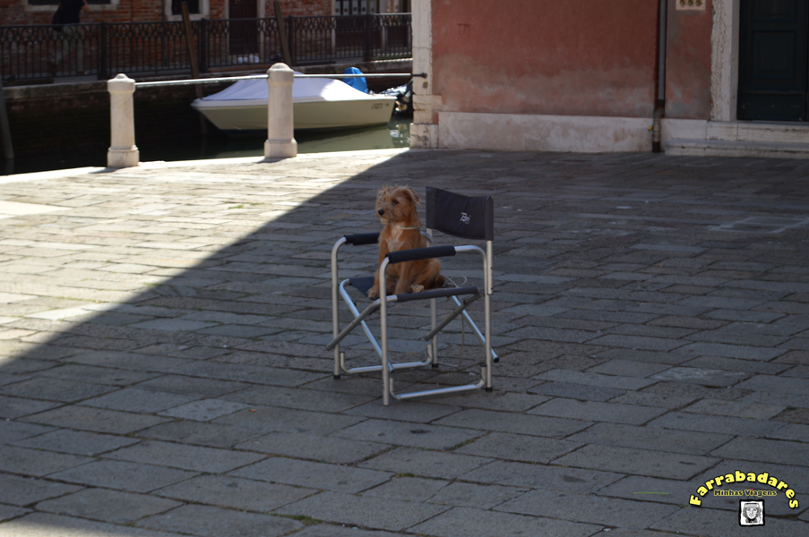 Veneza e o cachorro diretor