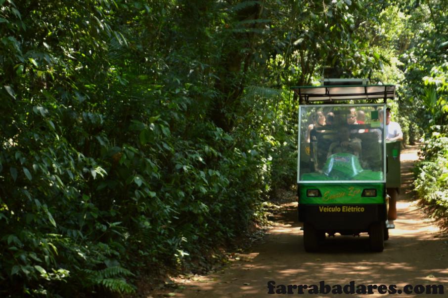 Parque Nacional do Iguaçu - Trilha em carro elétrico para o passeio do Macuco Safári