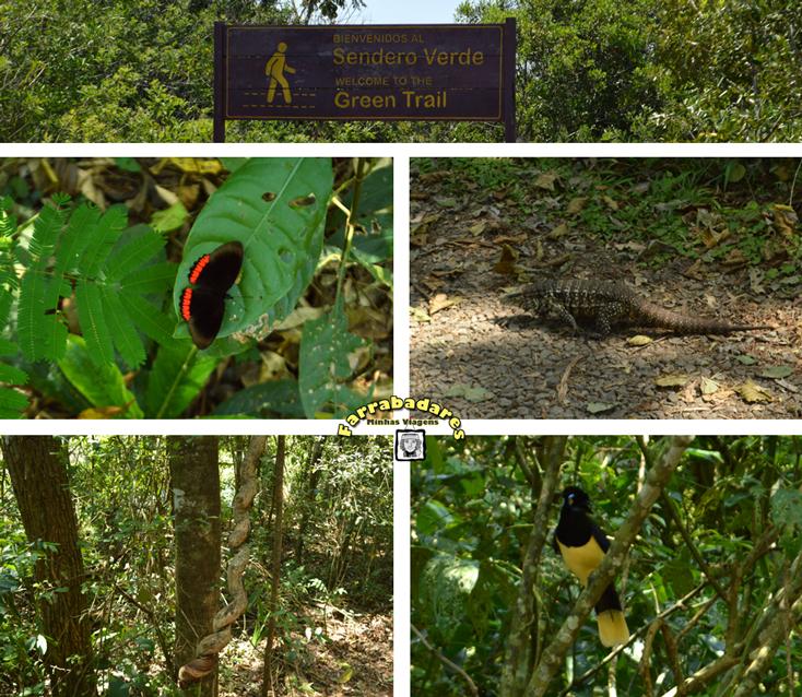 Parque Nacional Iguazú - trilha sendero verde