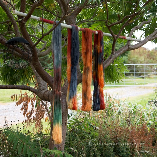 autumn_sock_yarn01