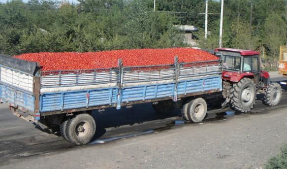 https://i1.wp.com/www.farwestchina.com/wp-content/uploads/2011/08/Tomato-Transportation-583x343.jpg?resize=583%2C343