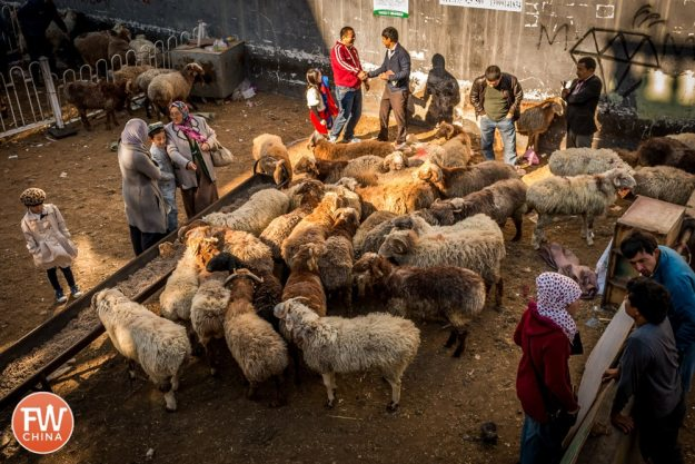 A sheep pen in Urumqi, Xinjiang during Corban