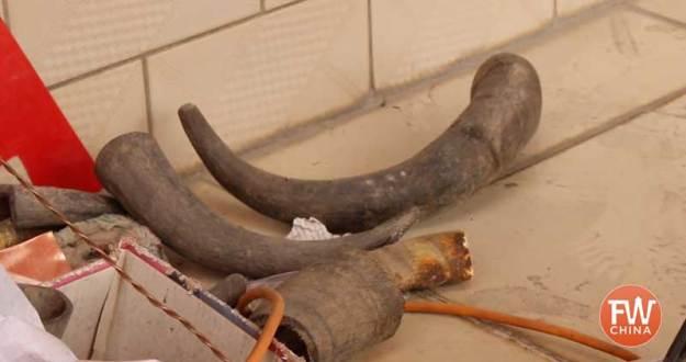 Bone and horn scraps