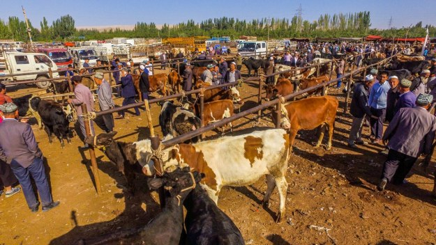 The Kashgar livestock market in Xinjiang, China