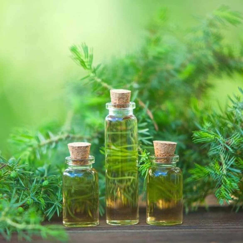 óleo essencial de melaleuca 4