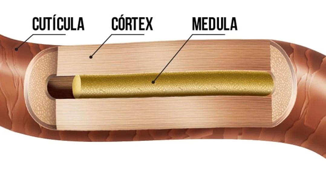 Já aqui desenho da estrutura capilar