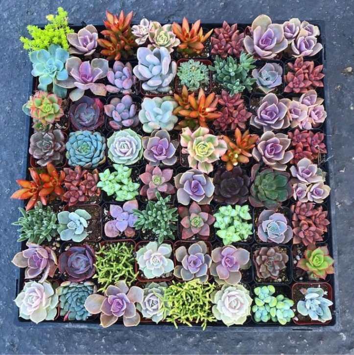 Quadro com muitas plantas