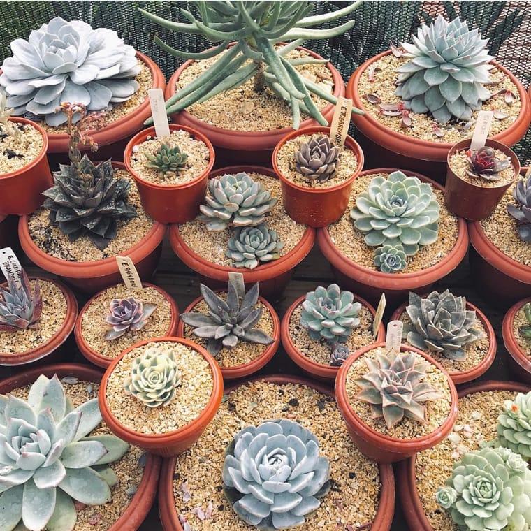 Jardim com vários vasos com suculentas