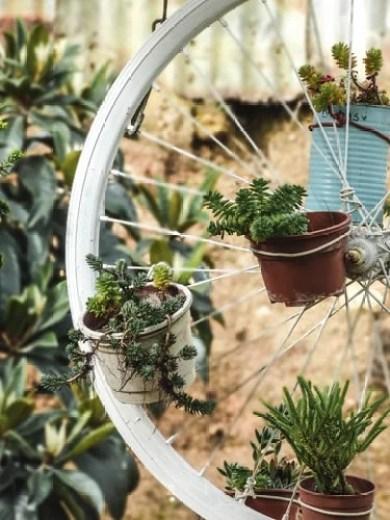 Vasos de cuculentas em pneu de bicicleta