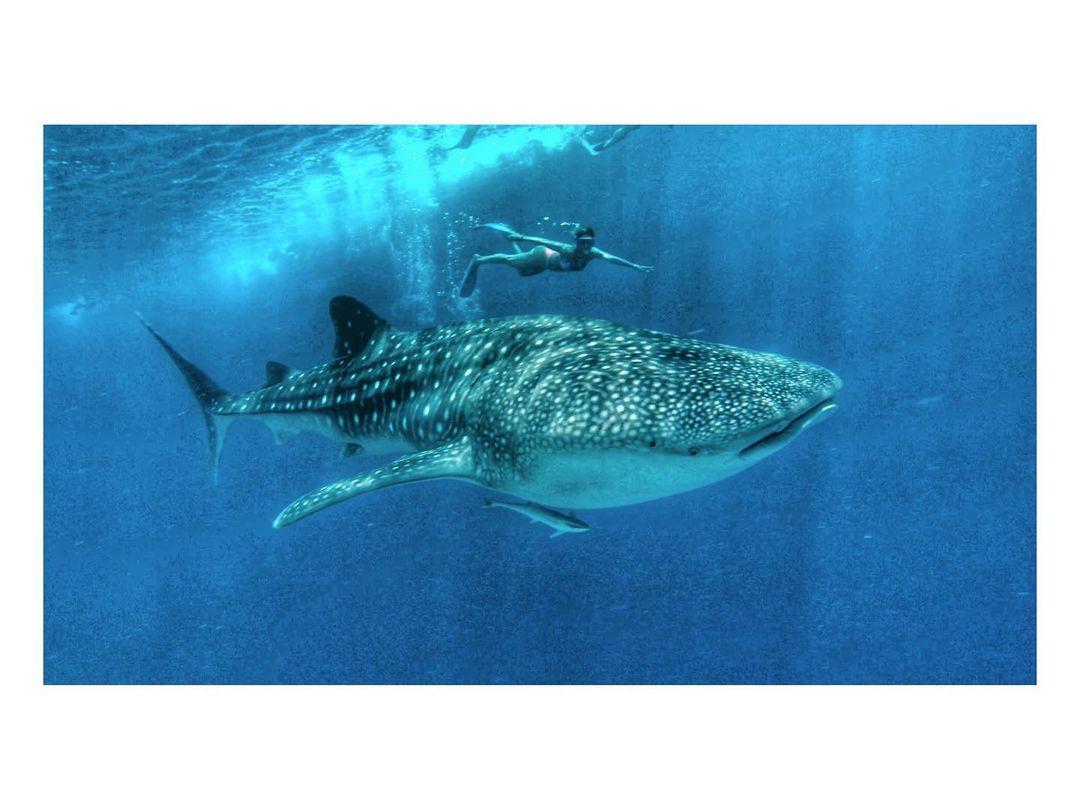 Juliana Paes de encontro com baleia gigante