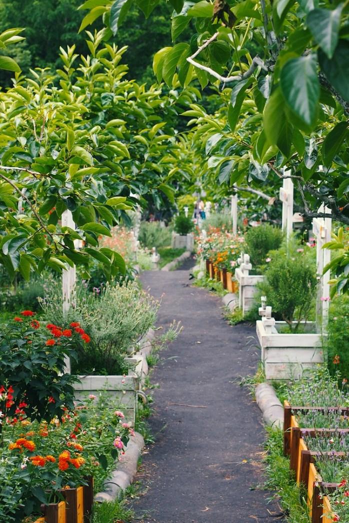 jardim sensorial com flores, árvores e ervas