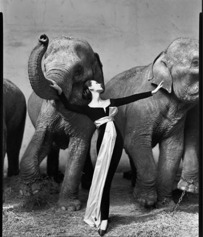 """""""Dovima com elefantes"""", primeiro vestido desenhado por Yves Saint Laurent para a Dior."""
