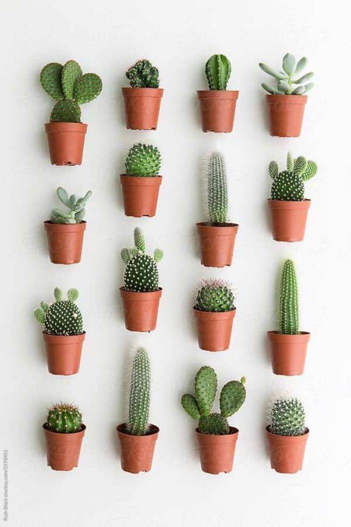 Parede com vasos de plantas.
