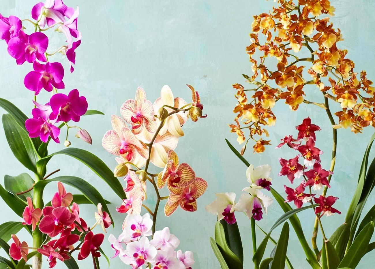 Flores para dentro de casa coloridas.