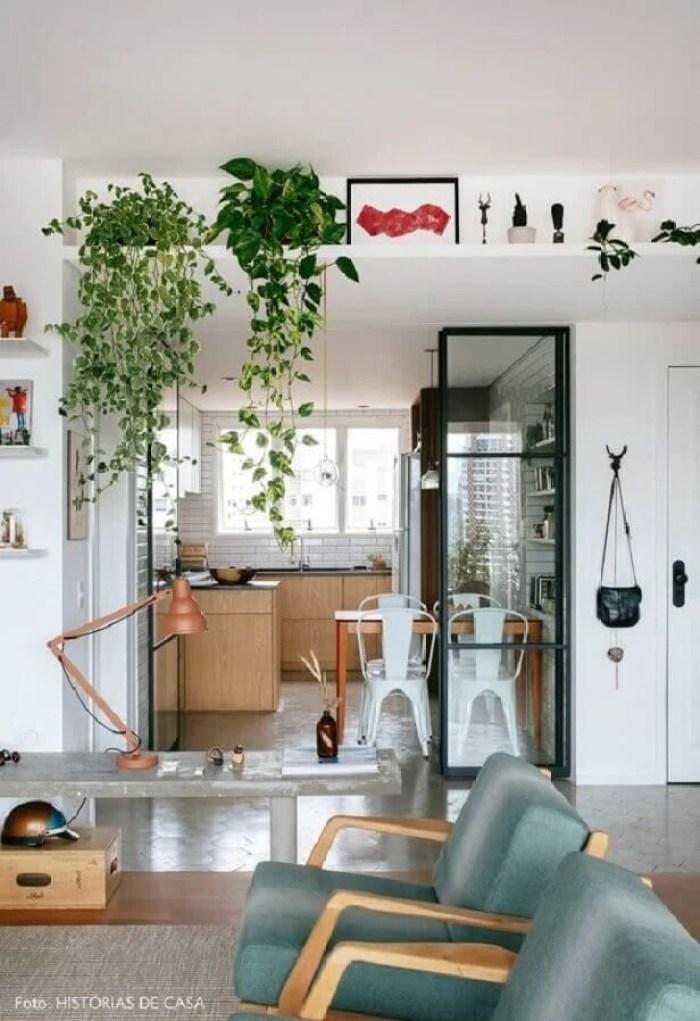 Plantas pendentes na prateleira.