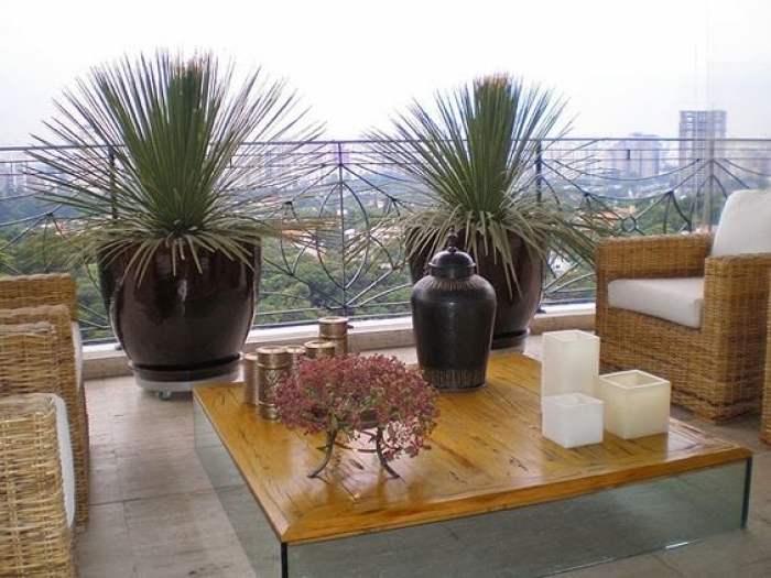 Dois vasos de planta.