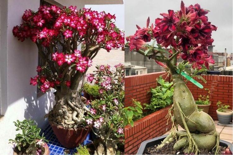 plantas na varanda de apartamento