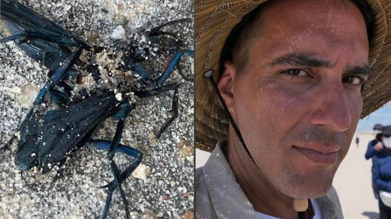 André Marques foi atacado por uma vespa caçadora nas gravações de No Limite e divulgou a imagem para seus seguidores (montagem: Fashion Bubbles)