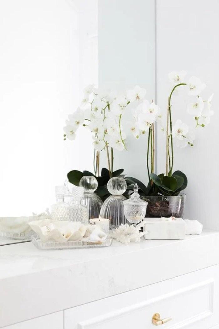 Orquídea branca.