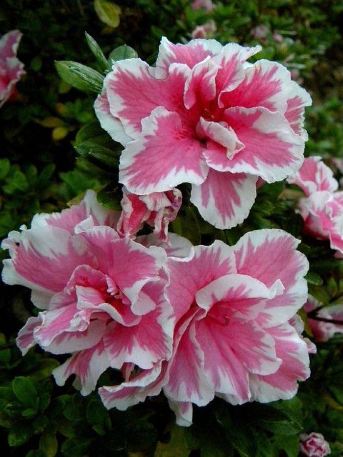 Flores que gostam de frio