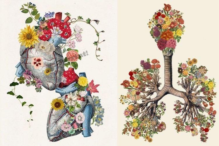 Duas opções de colagem de órgãos e flores