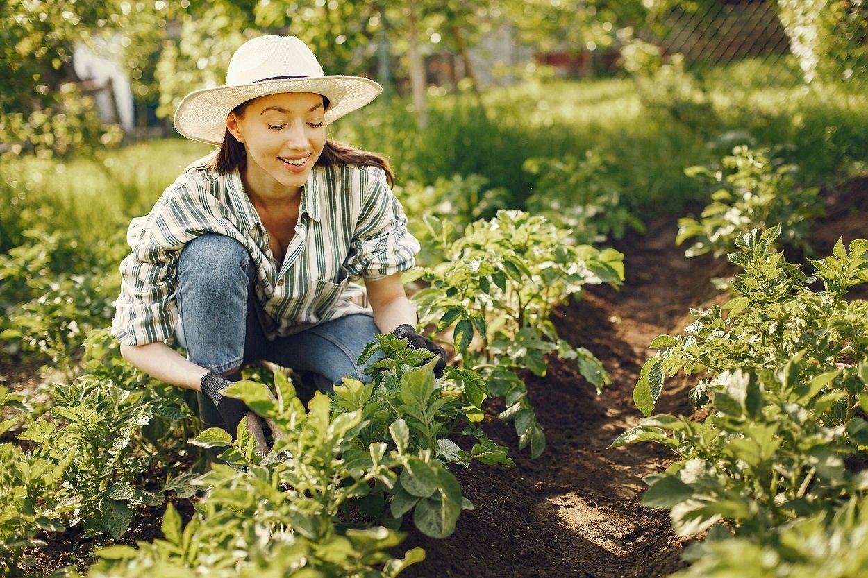 Mulher cuidando de horta usando chapéu de palha, camisa xadrez e calça jeans, como cultivar verduras