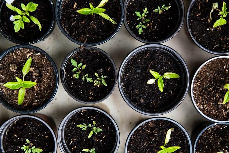 Foto de vasos com mudas de plantas vistos de cima