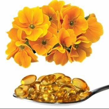 Flores de prímula com colher cheia de pílulas de óleo