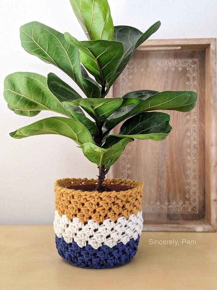 Foto de planta Ficus lyrata com cachepô de crochê